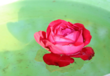Use Rose water to Combat Common Skin Care Issues