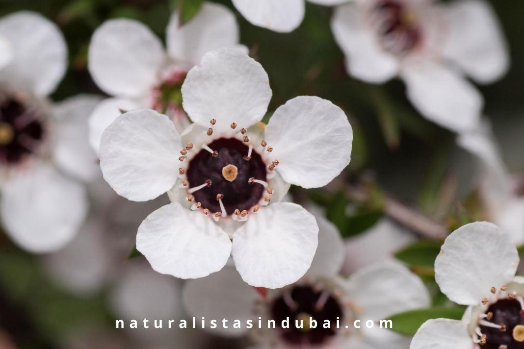 Where to Buy Manuka Honey in Dubai?